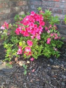 gardenblog3