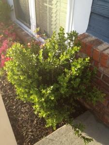gardenblog4